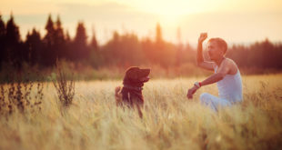 Exercise with pet help you to control blood sugar & manage diabetes