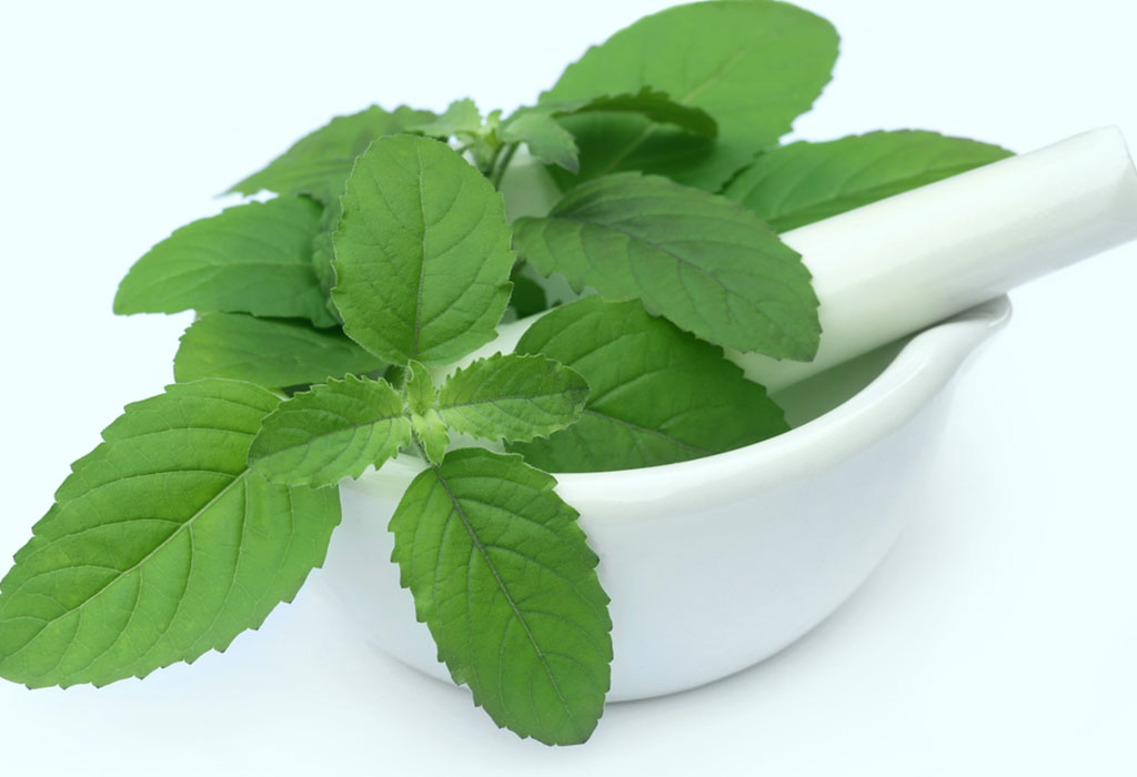 Holy Basil for Diabetes