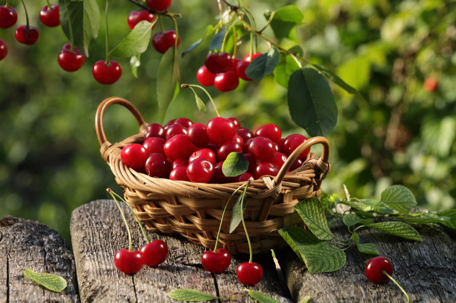 Cherries - The 5 Best Rainy Season Fruits to Control Your Blood Glucose Levels